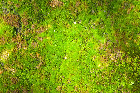 Moss close up  photo