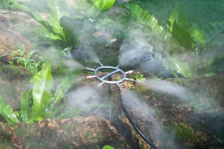 Sprinkler spraying fuzz water over bird nest fern Stock Photo - 17342795
