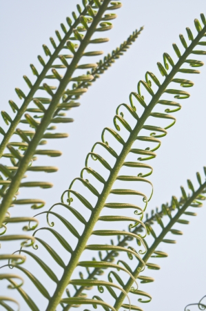 Young fresh fern leaf photo
