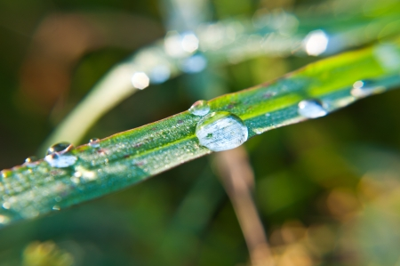 Hierba fresca con gotas de roc�o photo