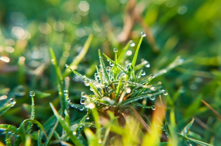 Dew on the grass in the morning photo