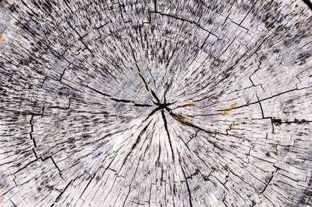 Abstract crack wood spiral style photo