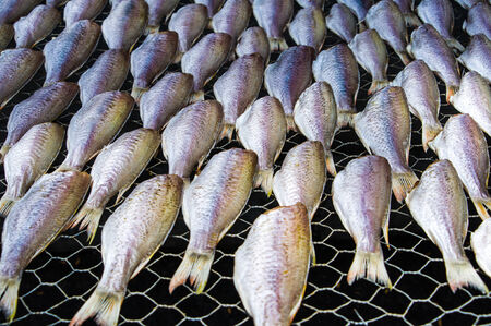 salty fish  Stock Photo