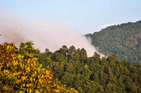 apogee: Fog on the forest mountains in PokaharaNepal