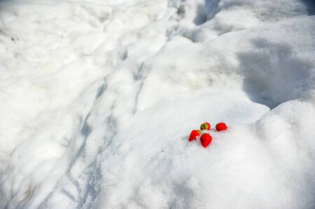 Fresh strawberries on white of snow in winter season