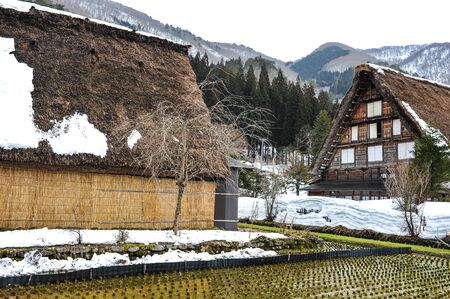 shirakawa go: Agriculture of rice field in the Shirakawa Go village Stock Photo