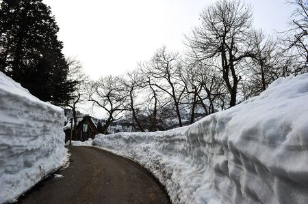 shirakawa go: Trees on the side of the road in winter