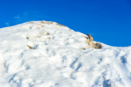 Beautiful white snow mountain against blue sky