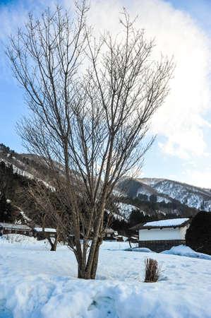 shrinkage: Tree branch in winter season Stock Photo