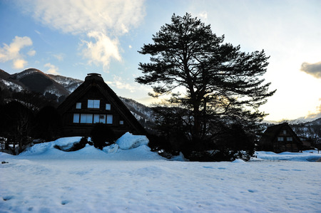 shirakawa go: Silhouette of classic house and big pine tree in Shirakawa go village