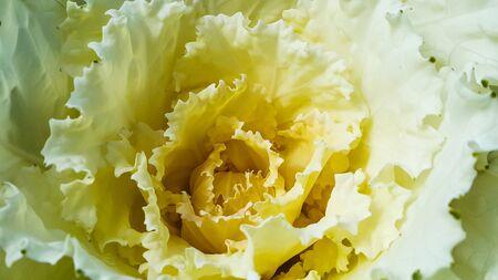 carpel: Top view of yellow carpel flower