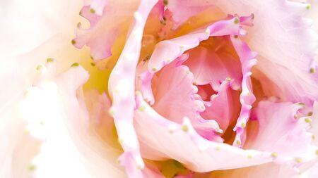 Wallpaper of beautiful flower