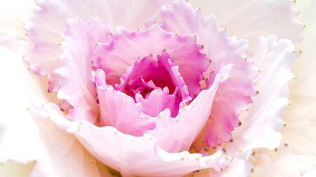Pollen of pink flower