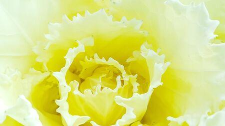 Pollen of yellow flowers pattern
