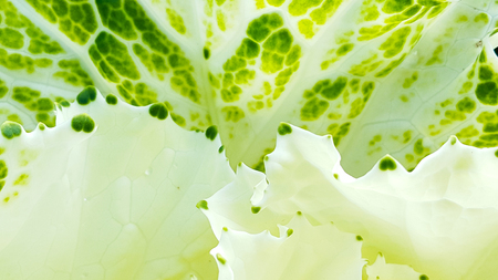 Beautiful white and green of flower petals pattern