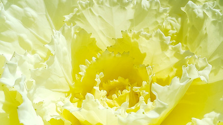 Yellow flower are closeup