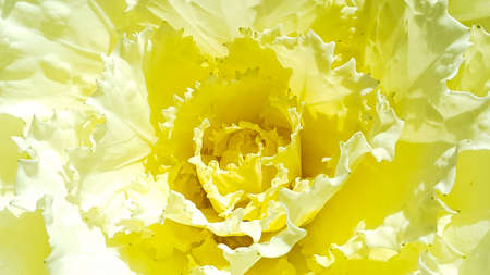 Yellow flower on white isolated Stock Photo
