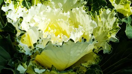 Pollen of white flower Stock Photo