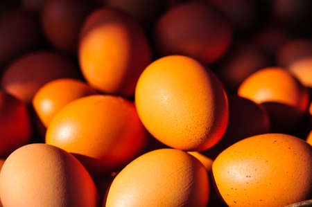 ingradient: The colors of eggs in the morning