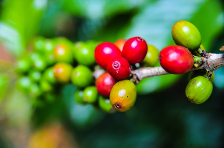 Close up of colorful coffee beans Stock Photo - 86571455