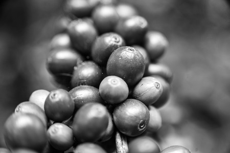Arts of shape coffee beans in black and white colors Stock Photo