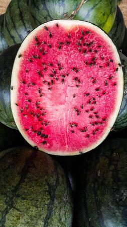 Lots flies eating watermelon slice