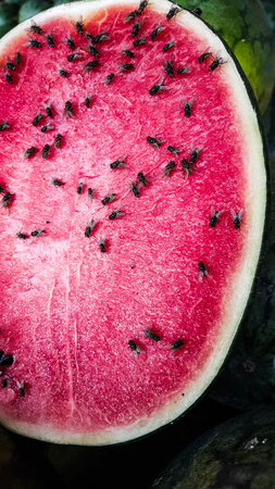 A lot of flies on the watermelon slice