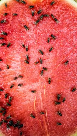 Dirty of watermelon slice