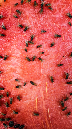 Flies are eating red of watermelon