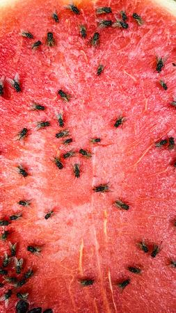 Flies on the watermelon slice