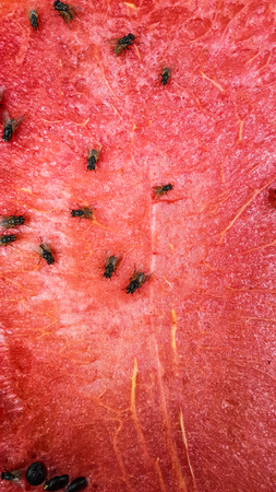 Flies are eating watermelon