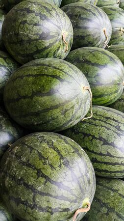 Close up to the camouflage skin of watermelon