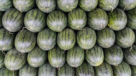 Oval of watermelon