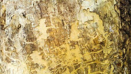 Surface of tree bark Stock Photo
