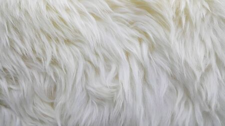 Waves of pure white wool