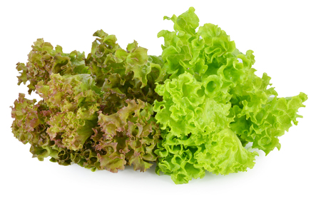 fresh red  lettuce leaves isolated on white photo