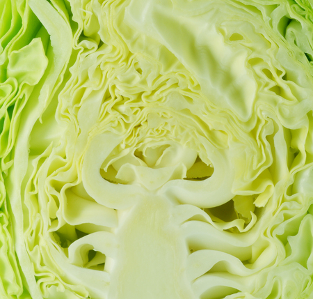 Cabbage cross section  photo
