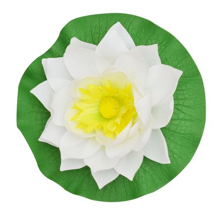 White water lily on white background photo