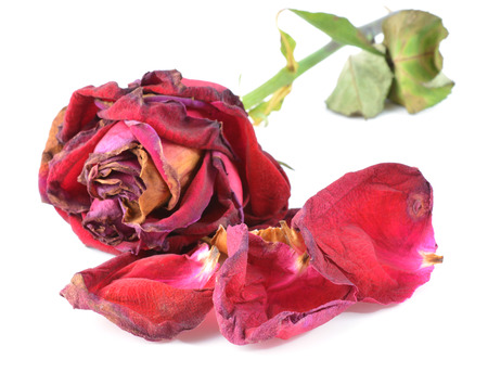 Bunch of withered roses photo