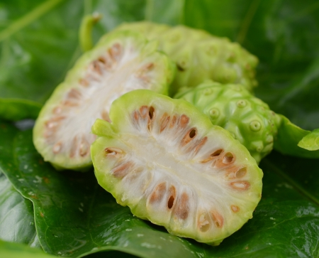Close up of Noni fruit and leaf on white background.
