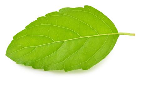 tulasi: Holy basil or tulsi leaves isolated over white  Stock Photo