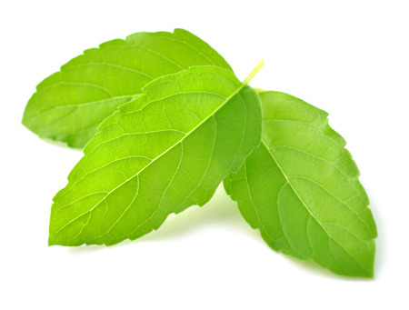 tulasi: Holy basil or tulsi leaves isolated over white  Stock Photo