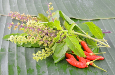 tulasi: Basil flower and bird eye chilli