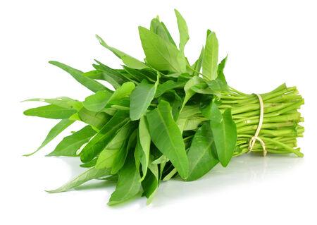 verduras verdes: Morning glory vegetal verde