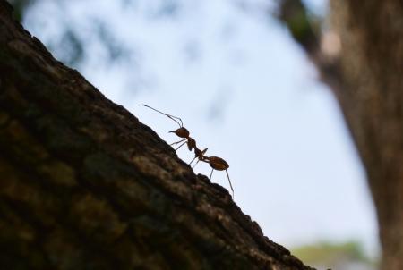 Red Ant Macro Portrait