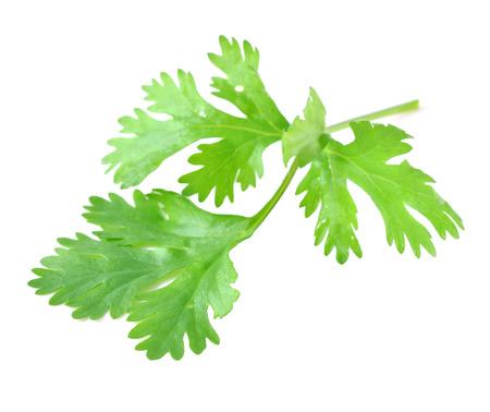 Fresh coriander leaf isolated on white background Banco de Imagens