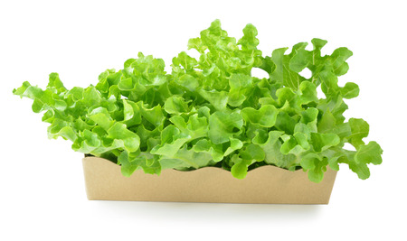 fresh green lettuce leaves isolated on white photo