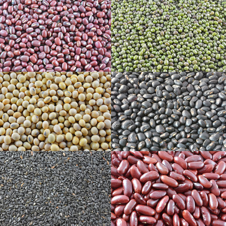 different types of beans photo
