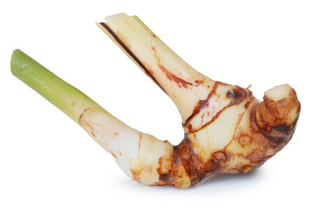 galangal: Galangal oil on white background