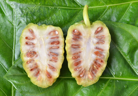 noni: Noni  Stock Photo